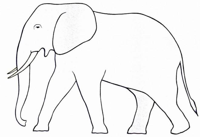 Coloriage et dessins gratuits Elephant 10 à imprimer