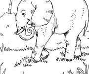 Coloriage Éléphant dans la nature