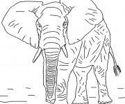 Coloriage Éléphant réaliste
