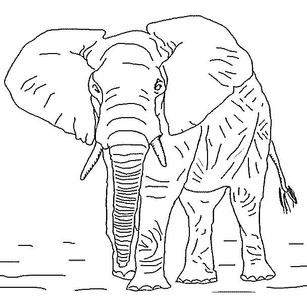 Coloriage l phant r aliste dessin gratuit imprimer - Dessin elephant rigolo ...