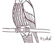 Coloriage et dessins gratuit Faucon à télécharger à imprimer
