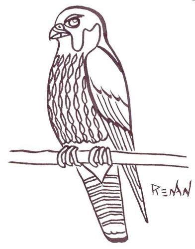Coloriage et dessins gratuits Faucon à télécharger à imprimer