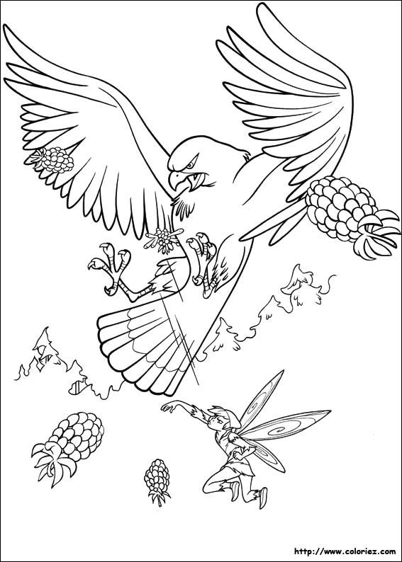 Coloriage et dessins gratuits Faucon en attaquant à imprimer