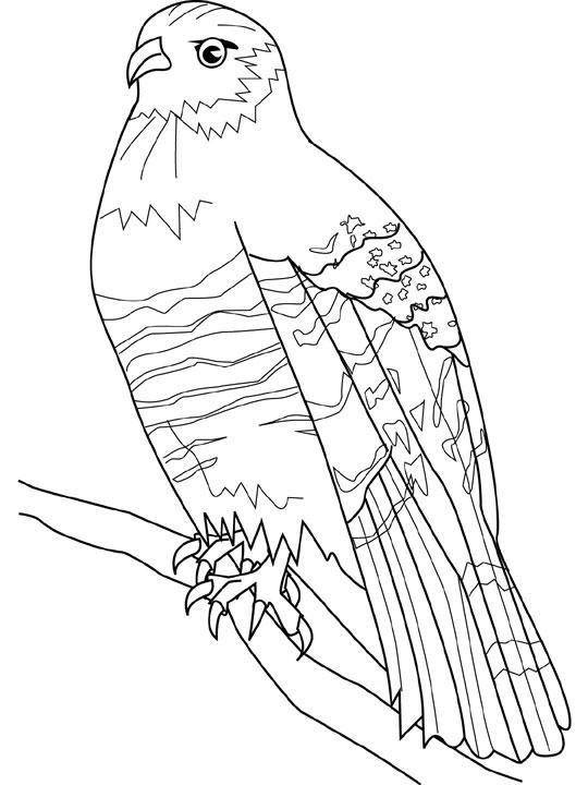 Coloriage et dessins gratuits Faucon en couleur à imprimer