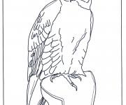 Coloriage et dessins gratuit Faucon en noir et blanc à imprimer