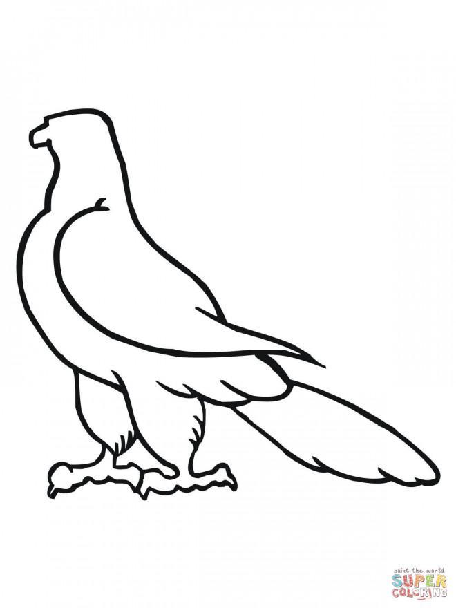 Coloriage et dessins gratuits Faucon facile à imprimer