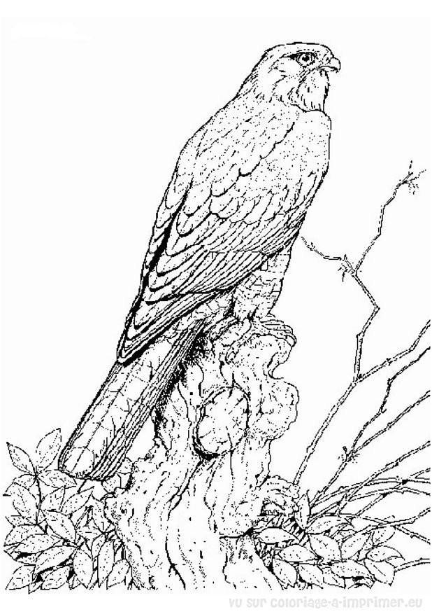 Coloriage et dessins gratuits Faucon maternelle à imprimer