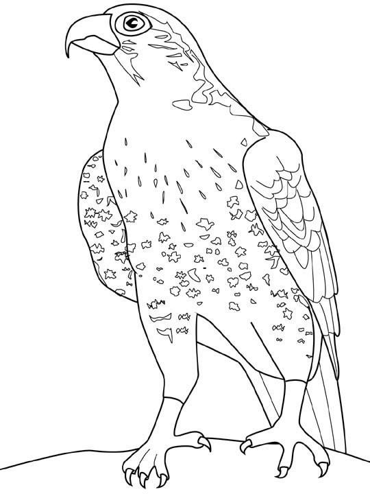 Coloriage et dessins gratuits Faucon portrait à imprimer