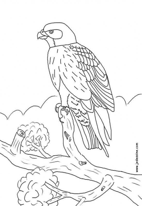 Coloriage et dessins gratuits Faucon sur l'arbre à imprimer