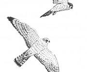 Coloriage et dessins gratuit Faucons en vol à imprimer