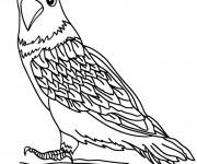 Coloriage et dessins gratuit Petit Faucon à imprimer
