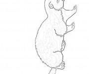 Coloriage et dessins gratuit Furet au crayon à imprimer