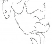 Coloriage Furet simple