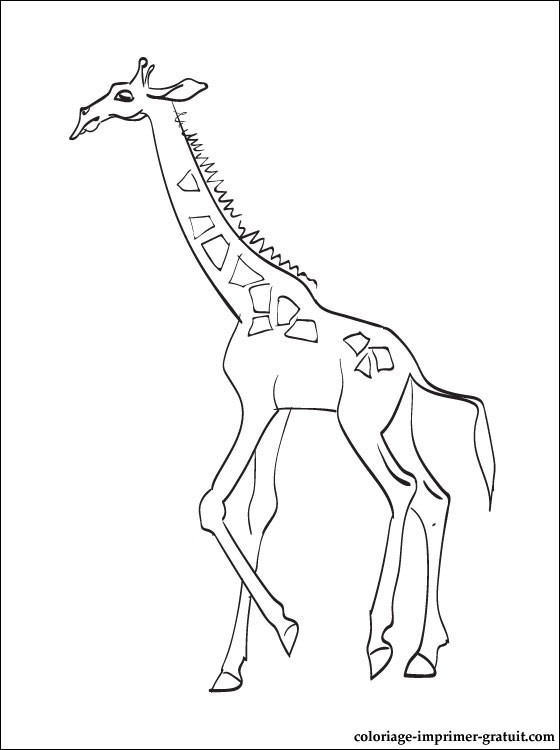 Coloriage et dessins gratuits Girafe à télécharger à imprimer
