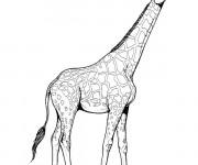 Coloriage et dessins gratuit Girafe au crayon à imprimer