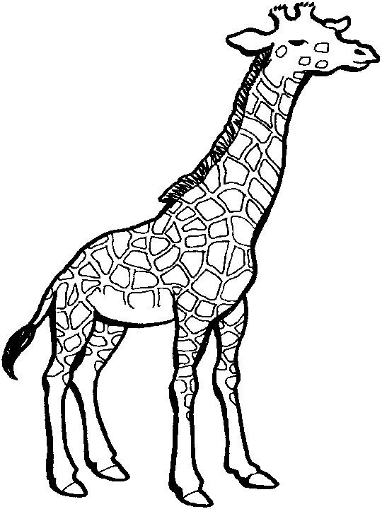 Coloriage et dessins gratuits Girafe avec yeux fermés à imprimer
