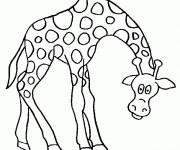 Coloriage et dessins gratuit Girafe baissant la tête à imprimer