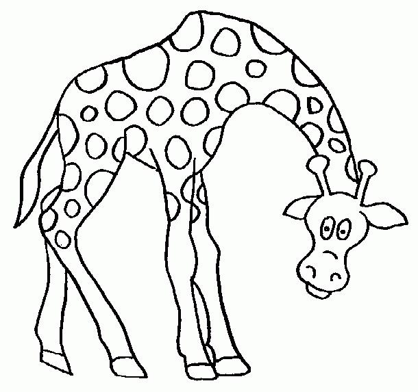 Coloriage Tete De Girafe A Imprimer.Coloriage Girafe Baissant La Tete Dessin Gratuit A Imprimer