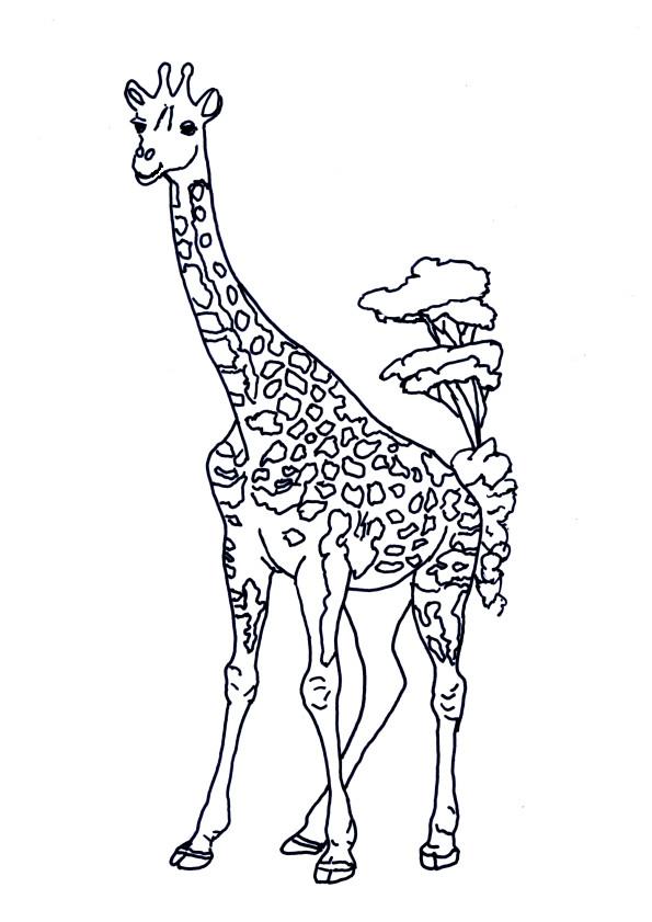 Coloriage Girafe dans la Savane dessin gratuit à imprimer