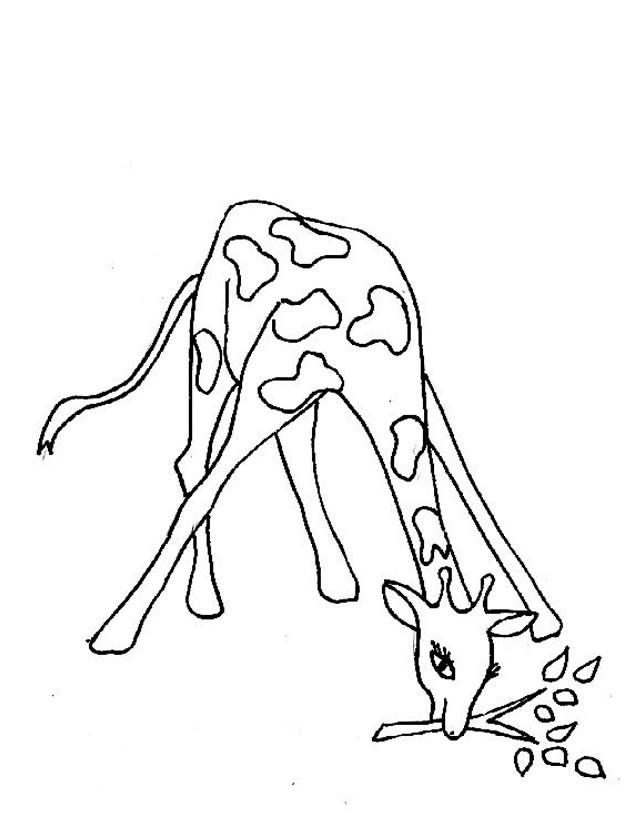 Coloriage et dessins gratuits Girafe en mangeant à imprimer