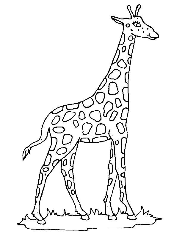 Coloriage et dessins gratuits Girafe en plein air à imprimer