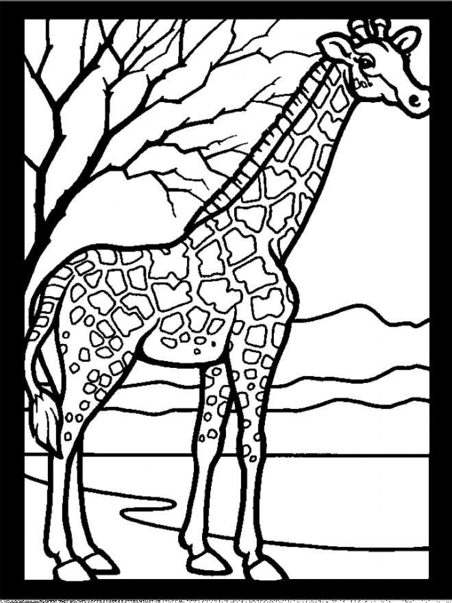 Coloriage Girafe Maternelle.Coloriage Girafe Et Nature Dessin Gratuit A Imprimer