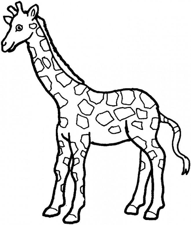 Coloriage et dessins gratuits Girafe et sa la longue cou à imprimer