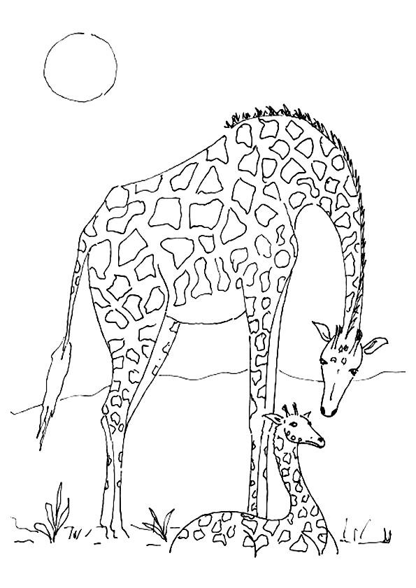 Coloriage et dessins gratuits Girafe et son  bébé sous le soleil à imprimer