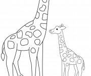 Coloriage et dessins gratuit Girafe et son petit à imprimer