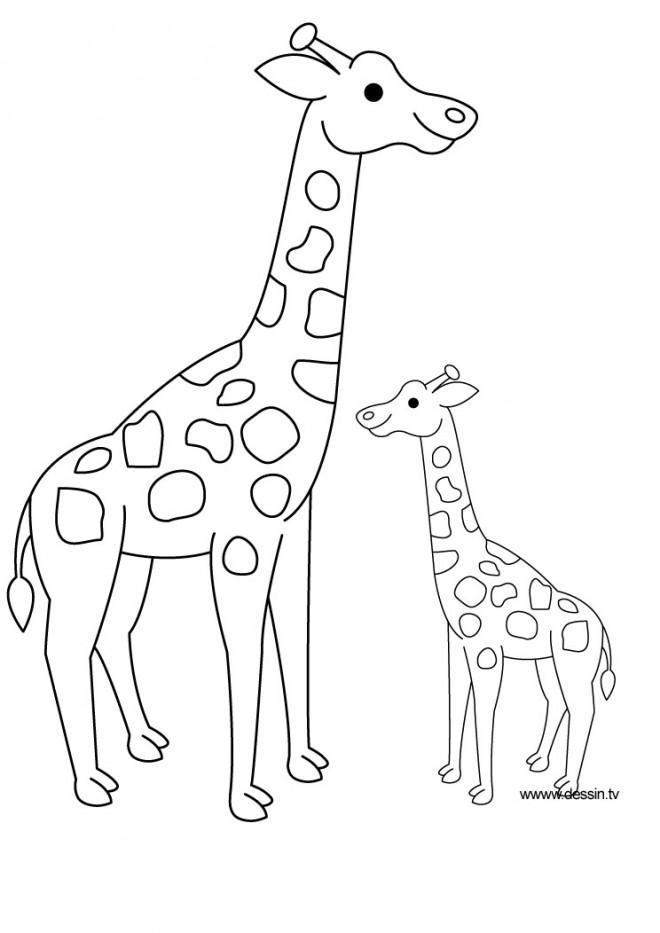 Coloriage Girafe Et Son Petit Dessin Gratuit à Imprimer