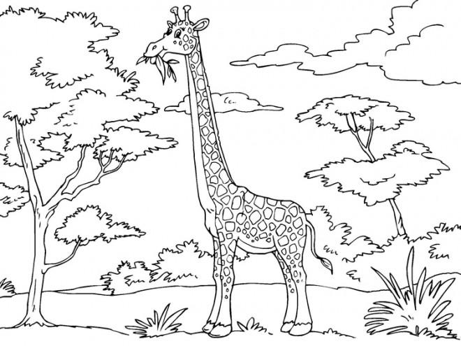 Coloriage et dessins gratuits Girafe mange de l'arbre à imprimer