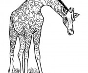 Coloriage Girafe maternelle