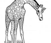 Coloriage et dessins gratuit Girafe maternelle à imprimer