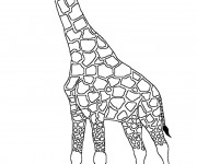 Coloriage Girafe Gratuit A Imprimer Liste 20 A 40
