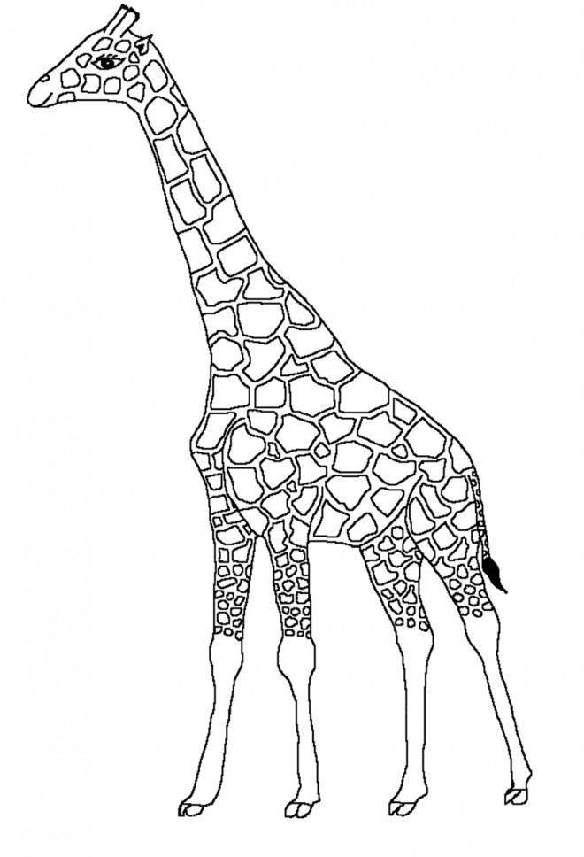 Coloriage Tete De Girafe A Imprimer.Dessin Girafe Simple