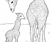 Coloriage et dessins gratuit Girafe prend soin de son petit à imprimer