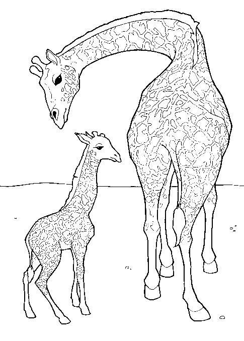 Coloriage et dessins gratuits Girafe prend soin de son petit à imprimer