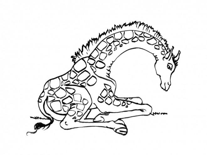 Coloriage et dessins gratuits Girafe se repose à imprimer