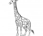 Coloriage Girafe simple