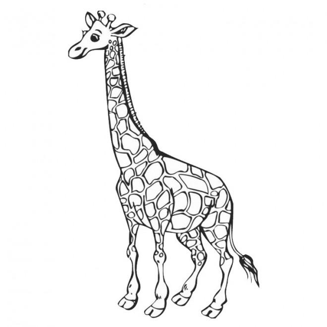 Coloriage Tete De Girafe A Imprimer.Coloriage Girafe Gratuit A Imprimer