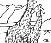 Coloriage Girafes amoureux
