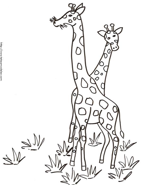 Coloriage et dessins gratuits Girafes en Afrique à imprimer