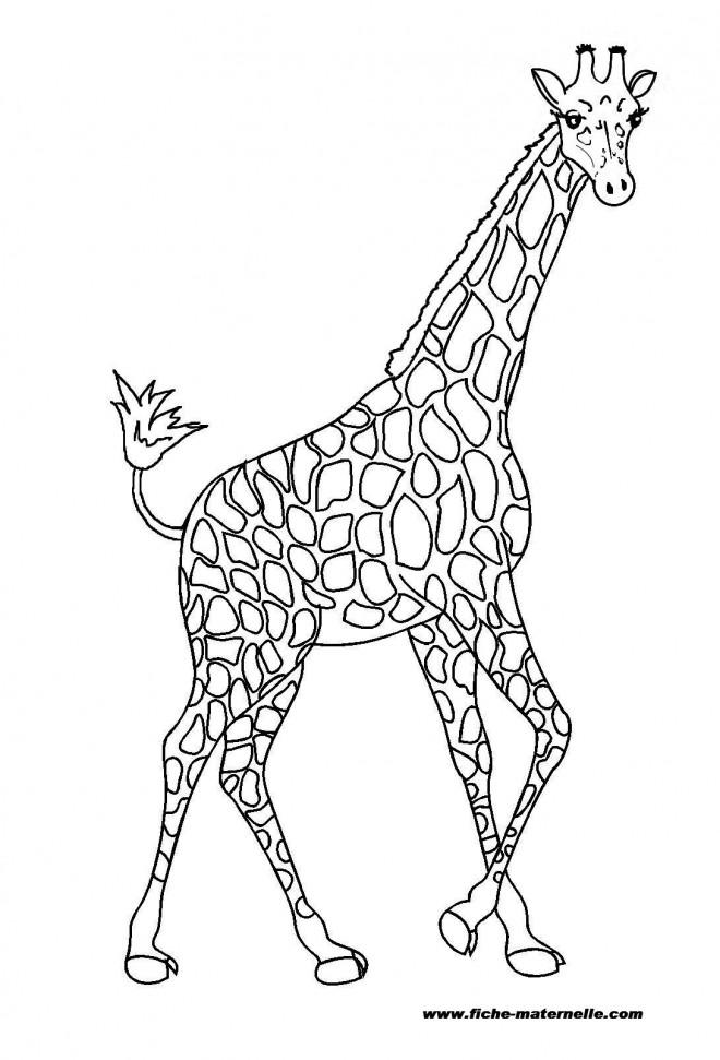 Coloriage et dessins gratuits Une Girafe de toute beauté à imprimer