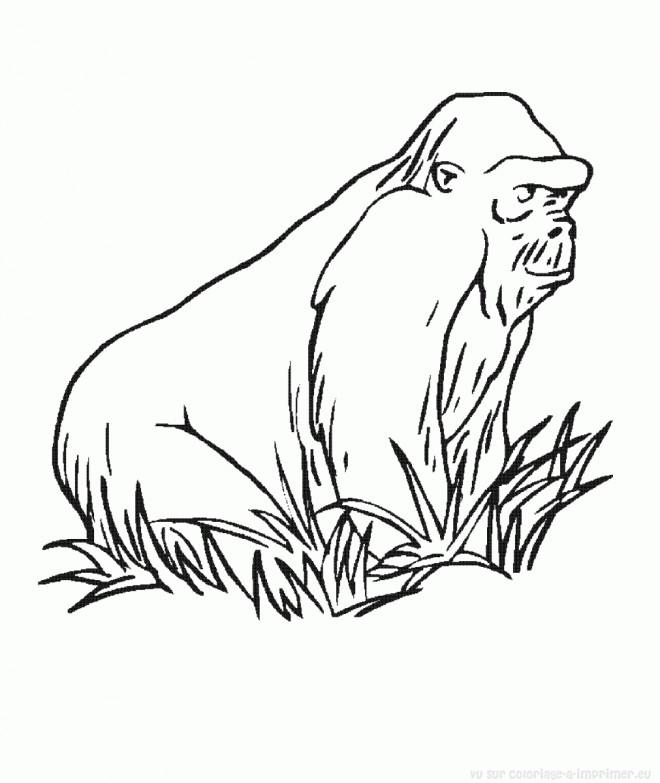 Coloriage gorille couleur dessin gratuit imprimer - Gorille coloriage ...