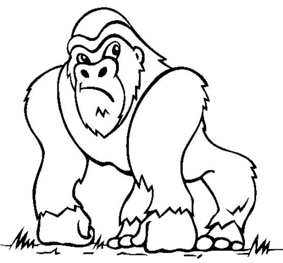 Coloriage Gorille Dessin Animé Dessin Gratuit à Imprimer