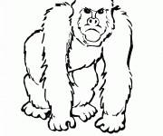 Coloriage Gorille en colère
