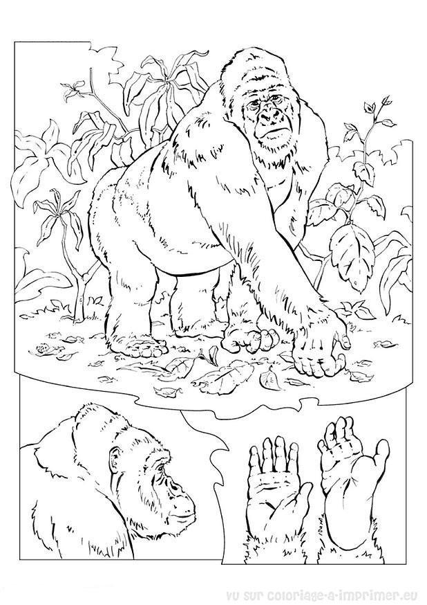 Coloriage et dessins gratuits Gorille et plantes à imprimer
