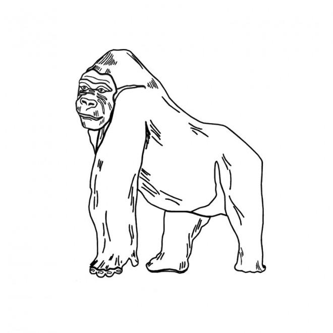 Coloriage et dessins gratuits Gorille facile à imprimer