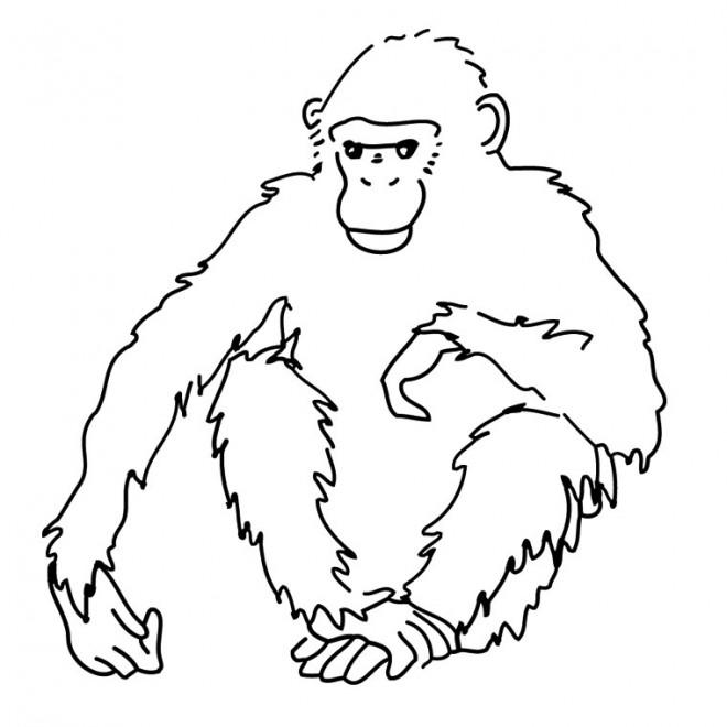 Coloriage et dessins gratuits Gorille pour enfant à imprimer
