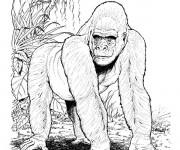 Coloriage Gorille réaliste